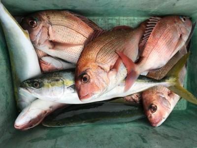 釣り船 黒潮丸の2019年1月10日(木)1枚目の写真
