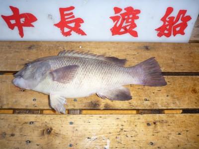 中長渡船の2019年1月13日(日)2枚目の写真