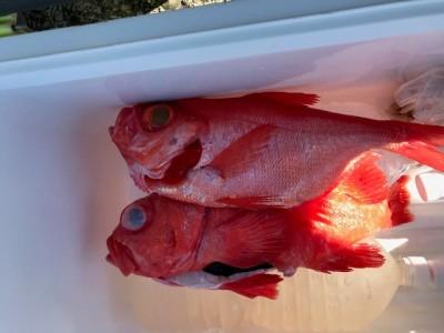 釣り船 黒潮丸の2019年1月19日(土)1枚目の写真