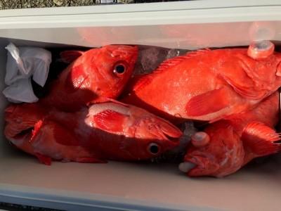 釣り船 黒潮丸の2019年1月19日(土)3枚目の写真