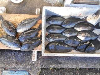弁天丸の2019年1月18日(金)1枚目の写真