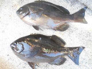 弁天丸の2019年1月23日(水)3枚目の写真
