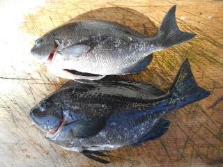 弁天丸の2019年1月23日(水)5枚目の写真