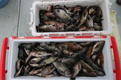 西岡遊漁の2018年12月18日(火)3枚目の写真