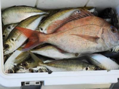 釣具の海友の2018年12月22日(土)4枚目の写真