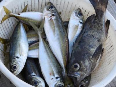釣具の海友の2018年12月25日(火)2枚目の写真