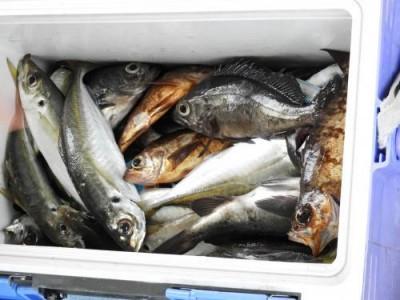 釣具の海友の2018年12月26日(水)3枚目の写真