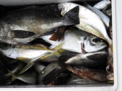 釣具の海友の2018年12月26日(水)4枚目の写真