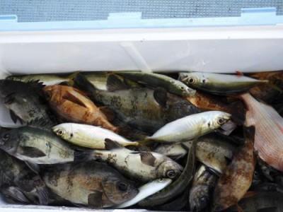 釣具の海友の2018年12月30日(日)5枚目の写真