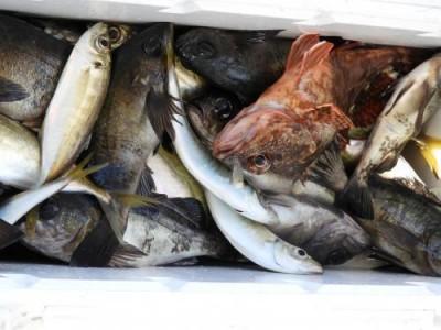 釣具の海友の2018年12月31日(月)3枚目の写真