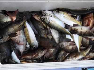 釣具の海友の2018年12月31日(月)4枚目の写真