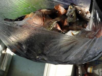 釣具の海友の2018年12月31日(月)5枚目の写真