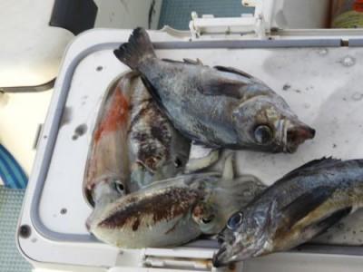 釣具の海友の2019年1月2日(水)3枚目の写真