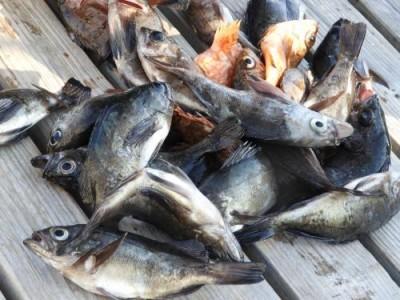 釣具の海友の2019年1月2日(水)5枚目の写真