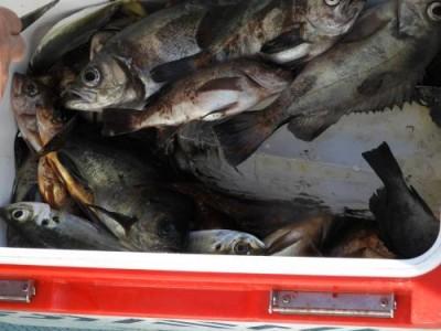 釣具の海友の2019年1月3日(木)4枚目の写真