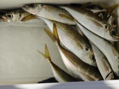 釣具の海友の2019年1月3日(木)5枚目の写真