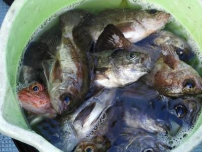 釣具の海友の2019年1月5日(土)1枚目の写真