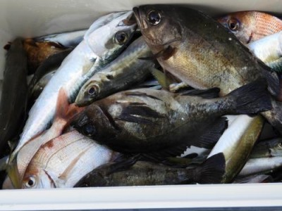 釣具の海友の2019年1月5日(土)2枚目の写真