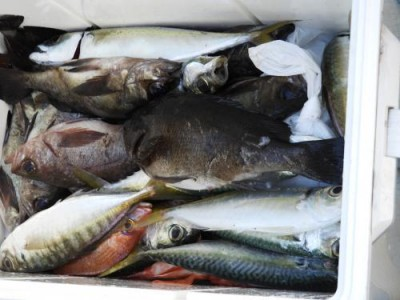 釣具の海友の2019年1月5日(土)3枚目の写真