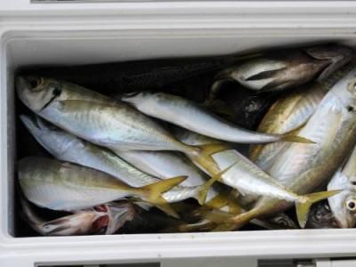 釣具の海友の2019年1月5日(土)5枚目の写真