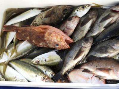 釣具の海友の2019年1月19日(土)5枚目の写真
