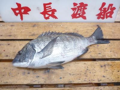 中長渡船の2019年1月30日(水)2枚目の写真