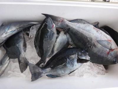 丸銀釣りセンターの2018年12月28日(金)1枚目の写真