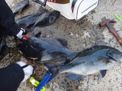 丸銀釣りセンターの2019年1月25日(金)5枚目の写真