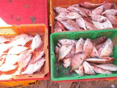 奥村釣船の2019年1月30日(水)4枚目の写真