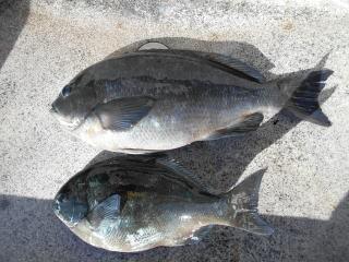 弁天丸の2019年1月30日(水)1枚目の写真