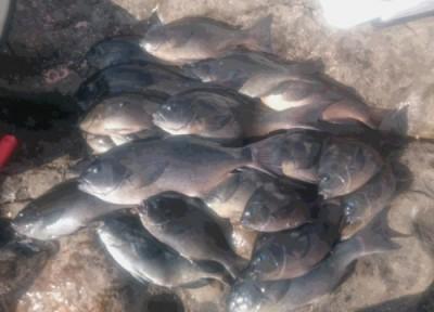 蝶栄丸の2019年1月30日(水)1枚目の写真