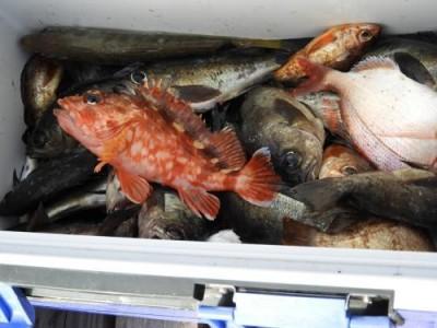釣具の海友の2019年2月10日(日)4枚目の写真