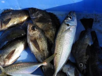 釣具の海友の2019年2月10日(日)5枚目の写真