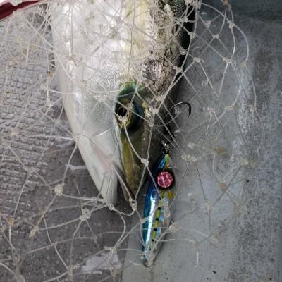 山洋丸の2019年2月14日(木)4枚目の写真