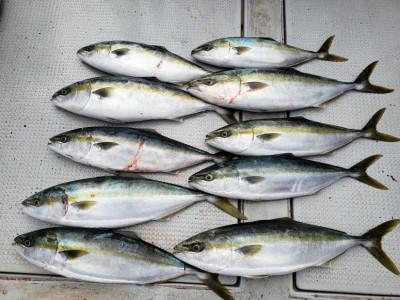西岡遊漁の2019年2月9日(土)2枚目の写真