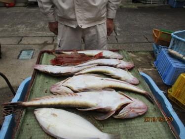 奥村釣船の2019年2月20日(水)4枚目の写真