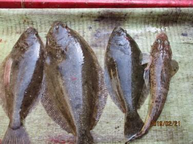 奥村釣船の2019年2月21日(木)4枚目の写真