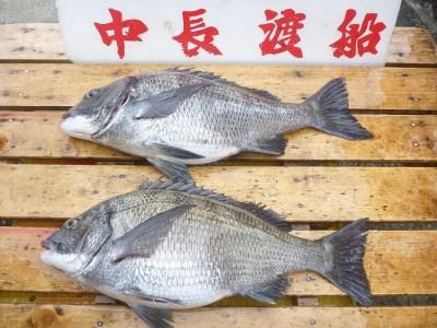 中長渡船の2019年2月22日(金)2枚目の写真