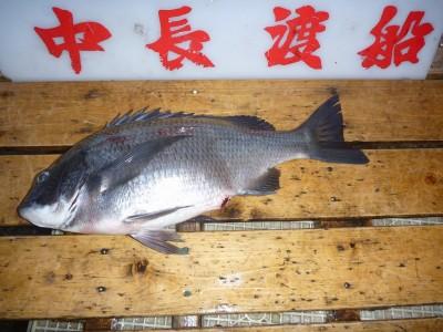 中長渡船の2019年2月23日(土)2枚目の写真