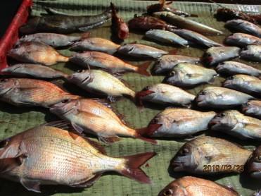 奥村釣船の2019年2月23日(土)5枚目の写真