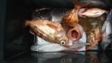 太政丸の2019年2月27日(水)1枚目の写真