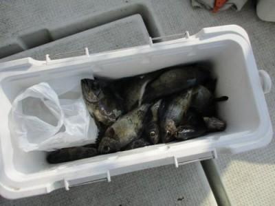 釣具の海友の2019年2月24日(日)2枚目の写真