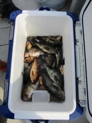 釣具の海友の2019年2月24日(日)3枚目の写真
