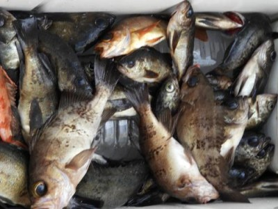 釣具の海友の2019年2月25日(月)1枚目の写真