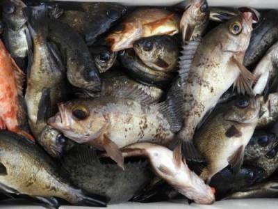 釣具の海友の2019年2月25日(月)2枚目の写真