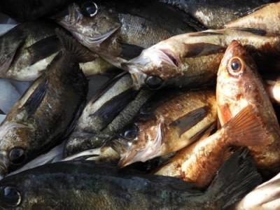 釣具の海友の2019年2月25日(月)3枚目の写真
