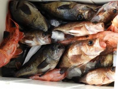 釣具の海友の2019年2月26日(火)3枚目の写真