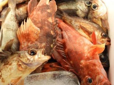 釣具の海友の2019年2月26日(火)4枚目の写真