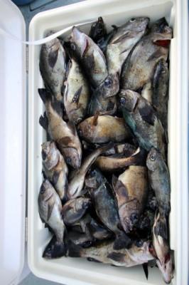 西岡遊漁の2019年2月20日(水)5枚目の写真