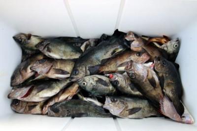 西岡遊漁の2019年2月21日(木)5枚目の写真